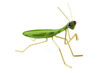Mambo Unlimited Ideas Fauna Green Praying Mantis