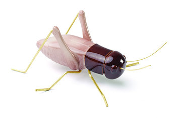 Mambo Unlimited Ideas Fauna Rose Cricket