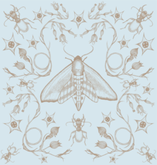 Wilful Ink Tangled Hawkmoth Wallpaper